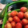 畑でたくさん取れた野菜の保存の画像