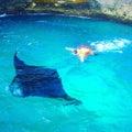 #バリ島ウィさんの画像