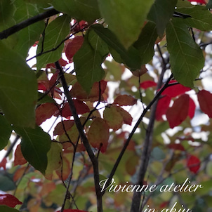 もう紅葉の画像