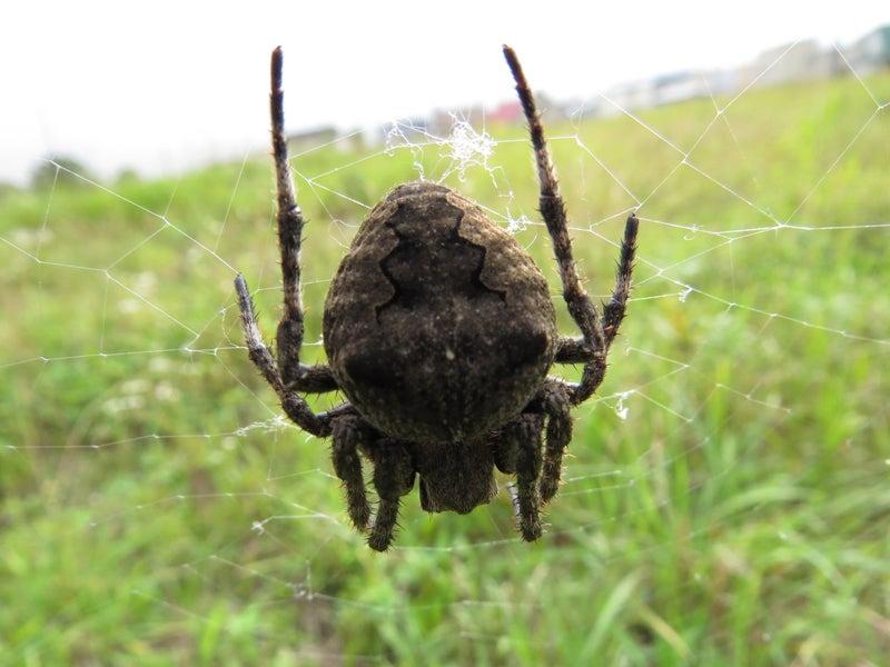 スズメバチも鬼蜘蛛も可愛いものです | なーさんのブログ