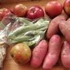 お隣から頂いた野菜たちの画像