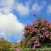 ハワイ女子ひとり旅・綺麗なお花に癒される♪