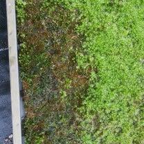 苔に付く虫の記事に添付されている画像