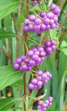 小紫180916_1202~020001.jpg