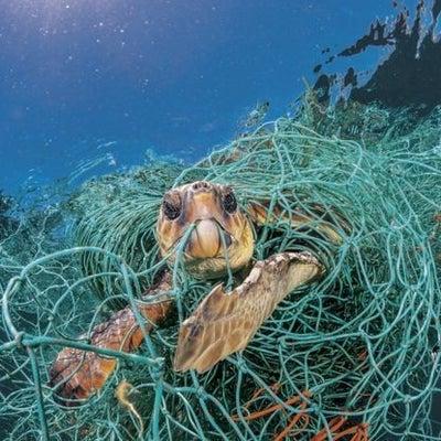 ゴーストネット 漁業から発生する海洋ごみの記事に添付されている画像