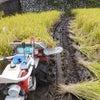 ∵ 稲刈の画像
