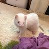 ペットケアMOMOさん/Pet Care MOMOの画像