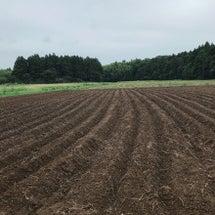 農業体験とバーベキュ…