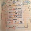 自律神経と内臓と生物学