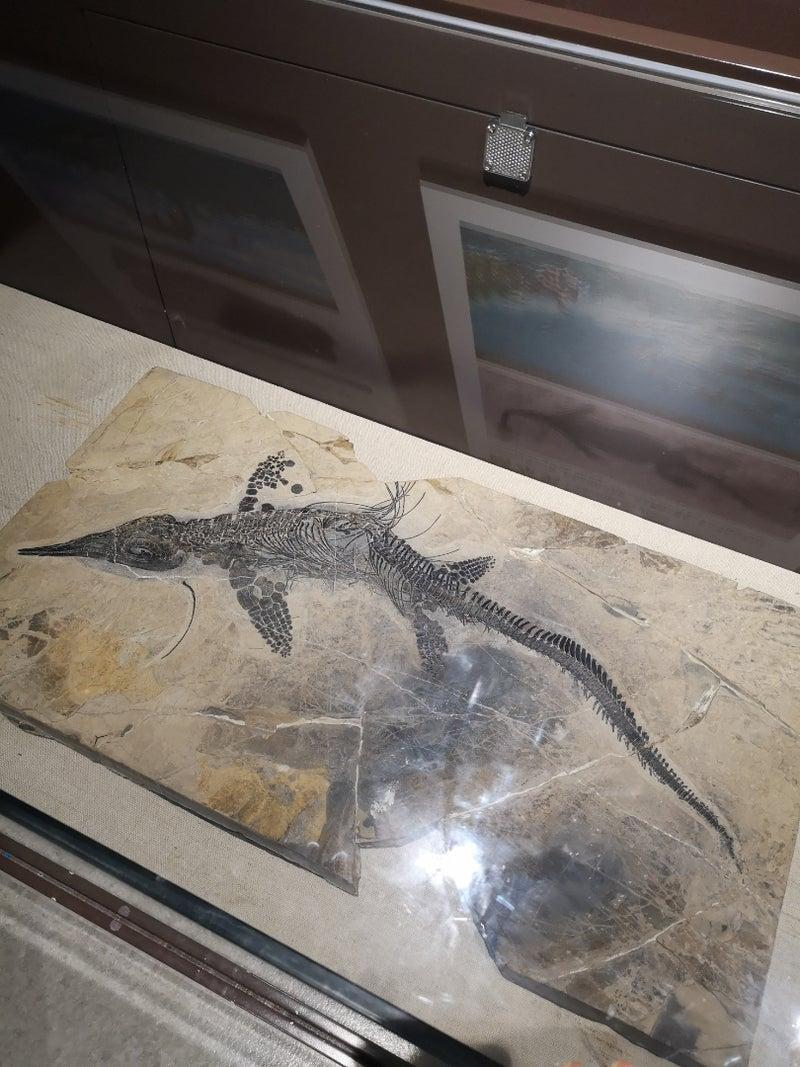 中国科学院古脊椎動物古人類学研究所 | 内田ありさの子育てブログ〜北京〜