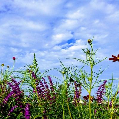 風薫る爽やかな季節の記事に添付されている画像
