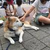 【署名】環境省の「殺処分ゼロ」の定義を明確化し「譲渡困難な犬猫を殺処分数から除外」することに反対の画像