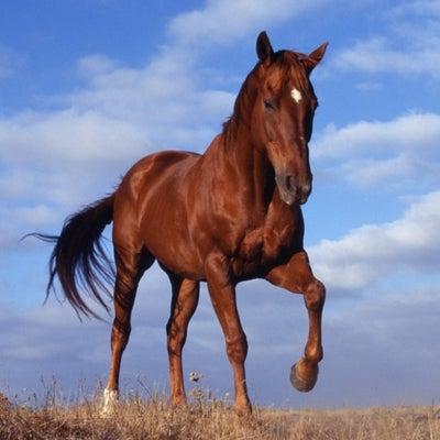【シリウスS予想2018】人気有力馬の動向と過去データから傾向分析の記事に添付されている画像
