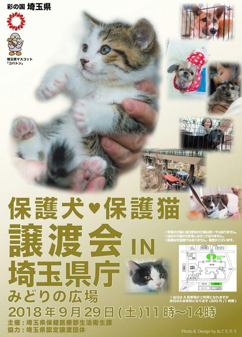 保護 犬 譲渡 会 埼玉 【埼玉県】犬の里親になれる譲渡会や保護施設をご紹介