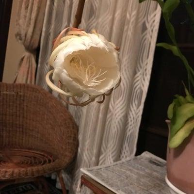 開花(^。^)の記事に添付されている画像