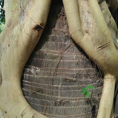 樹とカミカゼの大切なお話の記事に添付されている画像