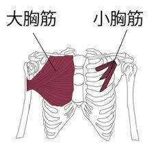 「猫背 胸筋」の画像検索結果