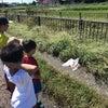 大ケガをした野鳥を発見!どうする??子どもたちの画像