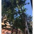 宝塚市で庭木(傾木)…