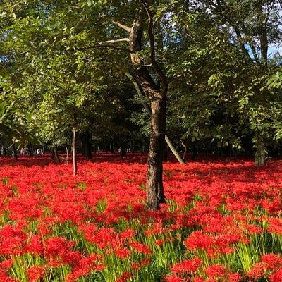 赤い絨毯【坂本】の記事に添付されている画像