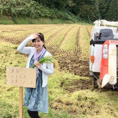 稲刈りに行ってきましたー結城奈美枝ーの記事に添付されている画像