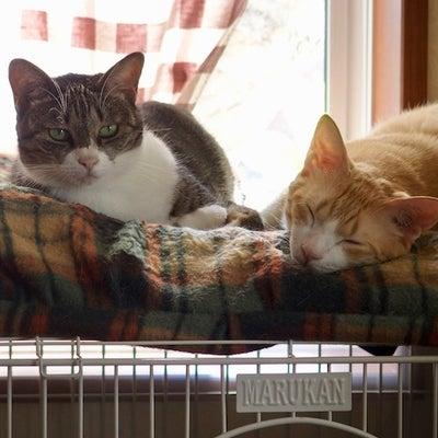 MacOS Mojave RSSリーダー どうにかして、猫さん。の記事に添付されている画像