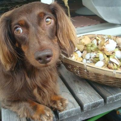 愛犬だいちゃんの豊かな表情を激写!の記事に添付されている画像