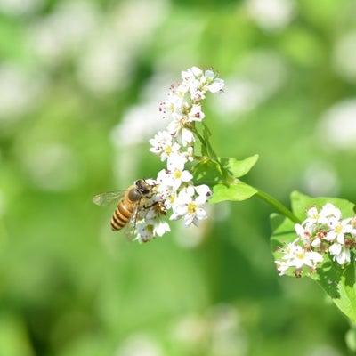 「生態系への影響が指摘されているネオニコチノイド系農薬の規制を求める意見書」が全の記事に添付されている画像