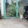 はっきりした色の三毛猫から学ぶ。の画像