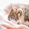 本日19時:動物たちに感謝と愛を込めて〜の画像