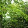 秋の軽井沢の画像