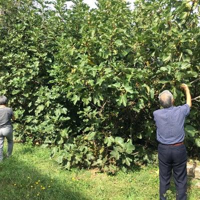 トスカーナで収穫物のテースティングの記事に添付されている画像