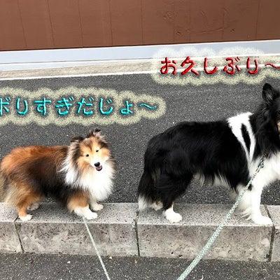 秋の道満ふれあい会のお知らせと埼玉県庁譲渡会の話の記事に添付されている画像