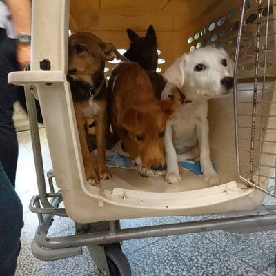 ☆沖縄から子犬4匹仲間入りしてましたぁ☆の記事に添付されている画像