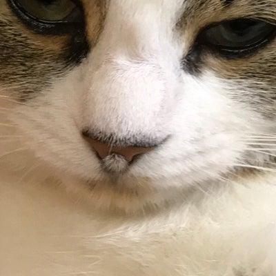 家の猫の鼻には毛が生えてる!!の記事に添付されている画像