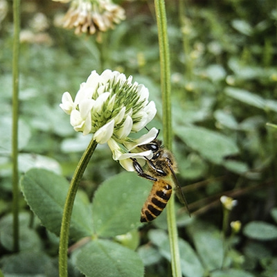 まずはベーシックな体づくり に 蜂蜜っっの記事に添付されている画像