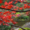 """""""偉大なる叡智と繋がる♡神・宇宙・無限の創造主。秋の加賀で神様と紅葉狩り♡"""""""