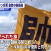 本日の<リブログ>旗艦式/韓国の日本ヘイトはお約束♪それよりも?!