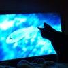 深夜、うちに猫がテレビをみにきた。の画像