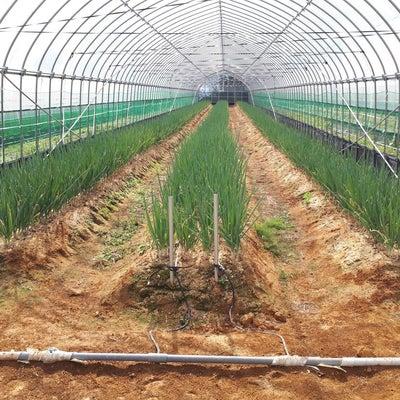 のどかな志和からこんにちは、ねぎ といえば 八幡原農園 編の記事に添付されている画像