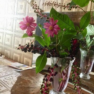 山ゴボウと秋明菊の記事に添付されている画像