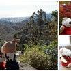 [募集開始]秋の鎌倉 紅葉だよりツアー 募集を開始します。(随時受付 最終出発12/12)