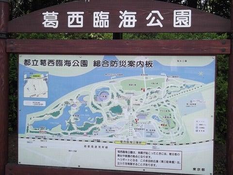公園 葛西 釣り 臨海 【東京都・荒川・旧江戸川】葛西臨海公園(西なぎさ)の釣り場