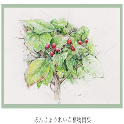 ほんじょうれいこ植物画展『花ことば2018』の記事に添付されている画像