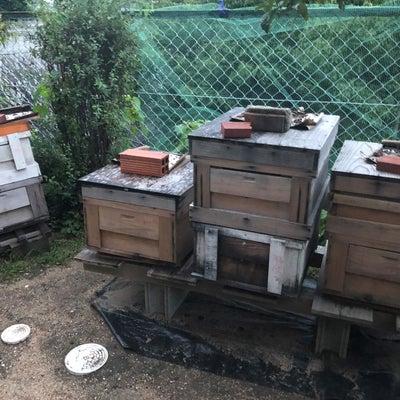 蜂さんも家族の記事に添付されている画像
