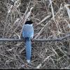 幸せの青い鳥を観たわの画像