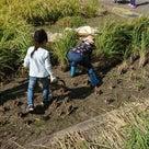 【稲刈り遠足  in奈良】の記事より