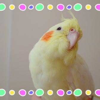 鳥グッズパトロール