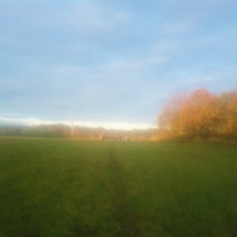 草地に放牧