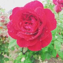 雨上がりのバラ園と虹色マルシェ♪の記事に添付されている画像